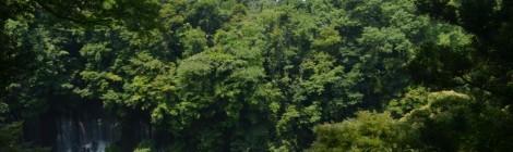 白糸の滝・静岡県【滝の王者、イメチェン中】
