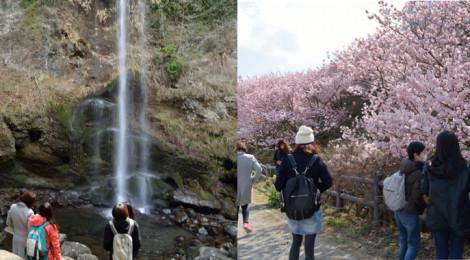 【3/13 SUN@足柄】滝と桜と甘いものツアー開催のお知らせ