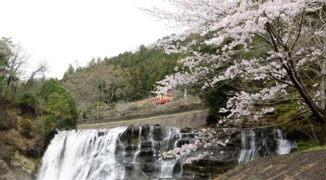 龍門の滝・栃木県【滝と桜と鉄道のコラボ!烏山の撮り鉄滝】