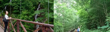 三頭大滝・東京都【檜原都民の森へ!セラピーロード滝散歩】